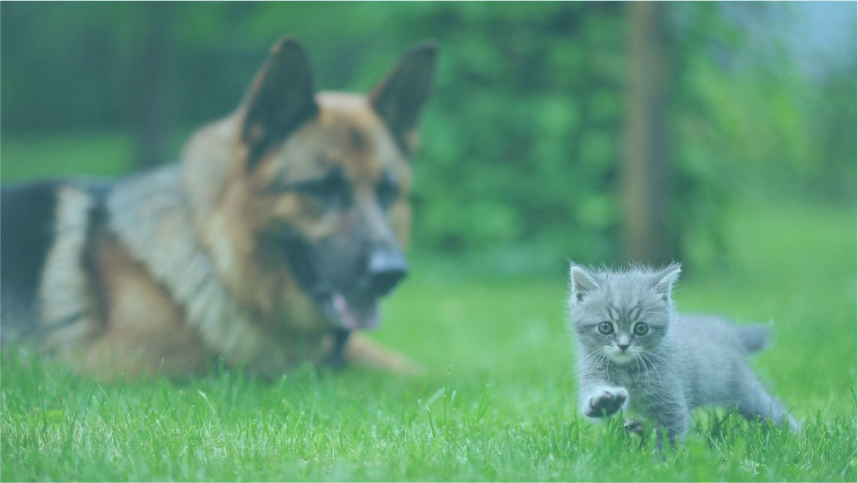 clinica_veterinaria