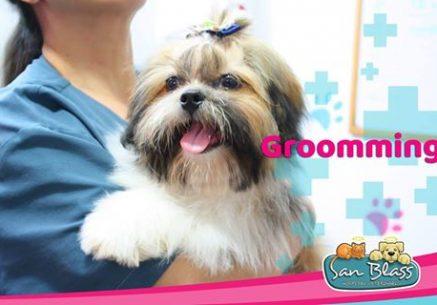 Groomming-en-perros_1_Armenia